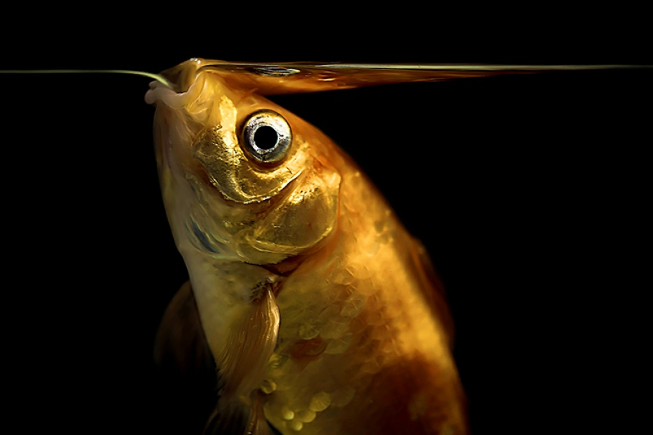 A piece of fine art art photography titled Mercy No. Fishing by Cath Schneider