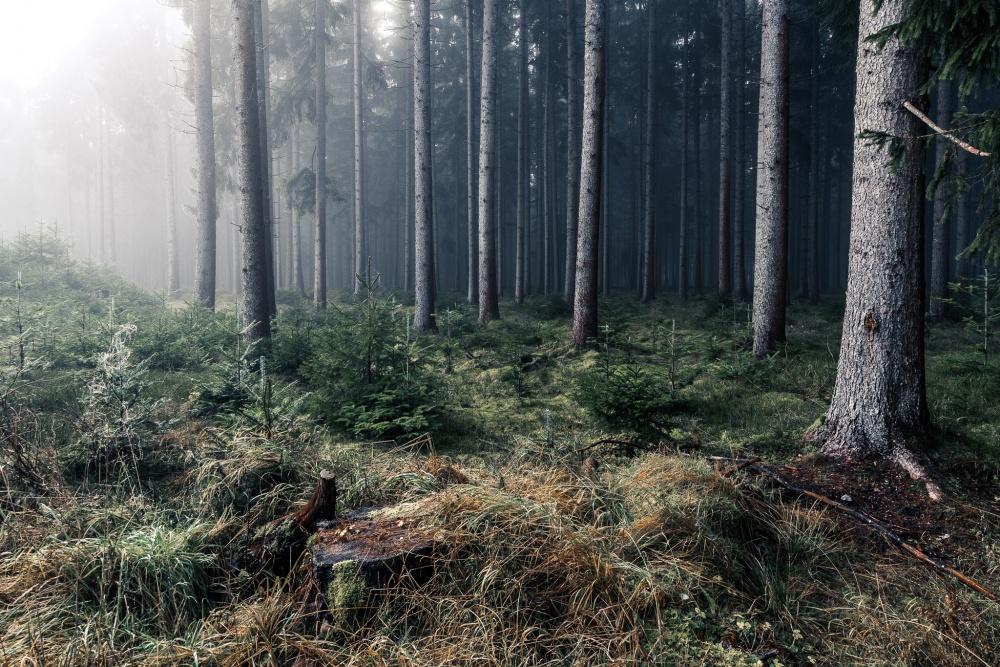 Mystischer Schwarzwald