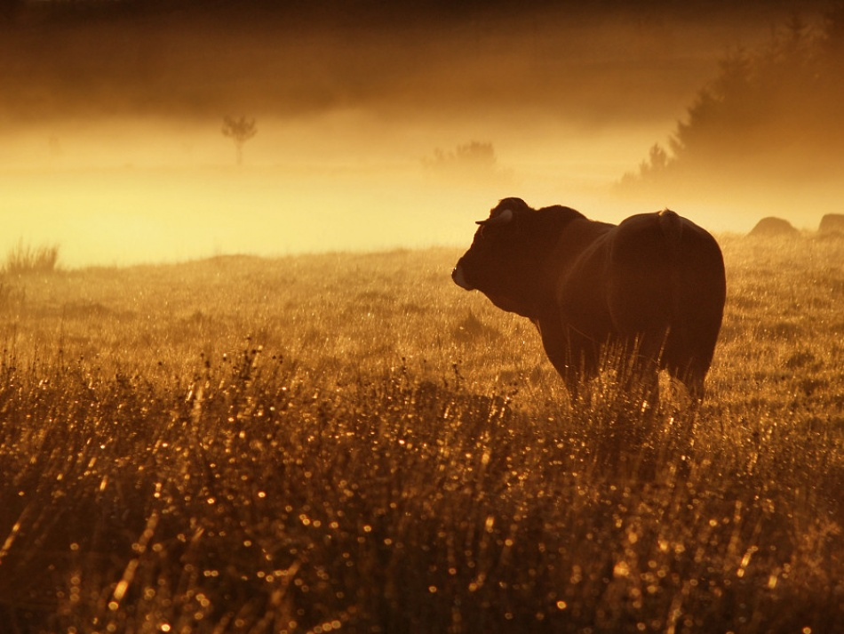 A piece of fine art art photography titled The Bull by Arnaud Millot
