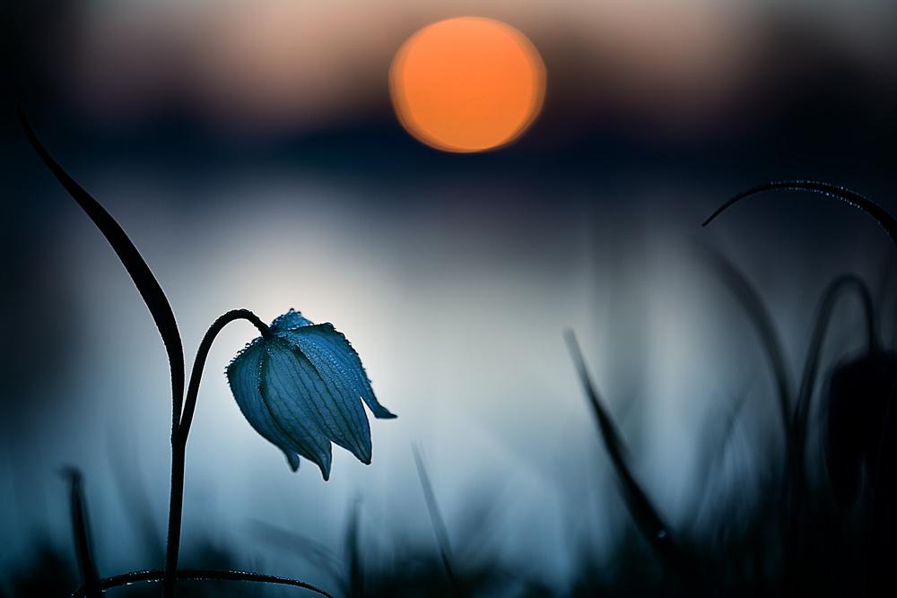 """"""" Rising sun..."""""""