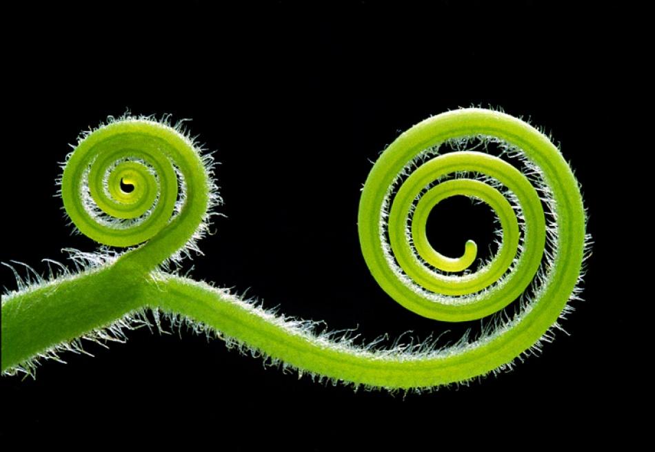 A piece of fine art art photography titled Chameleon by damyan