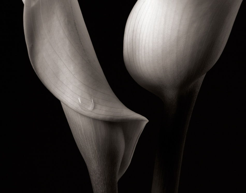 A piece of fine art art photography titled Tear Drop by Brad Kim