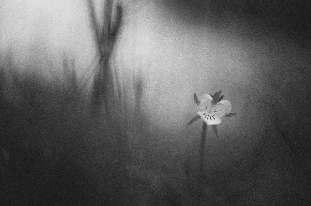 A piece of fine art art photography titled Untitled by Tapio Hyvönen