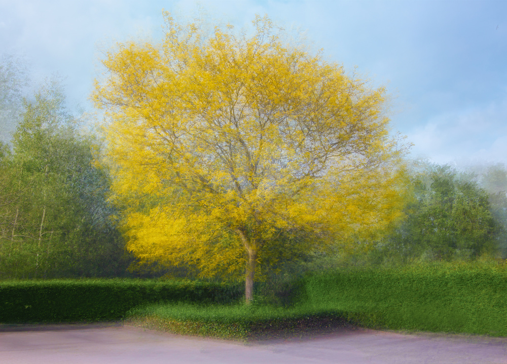 View this piece of fine art photography titled Yellow by Hans-Wolfgang Hawerkamp
