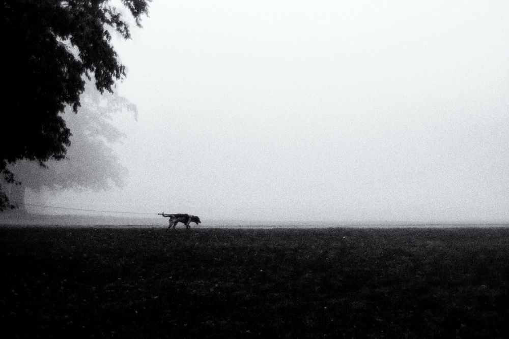 A piece of fine art art photography titled Walk the Dog by Jørgen Feldstedt