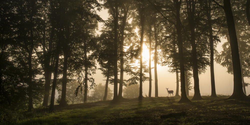 A piece of fine art art photography titled Deer In the Morning Mist by Leif Løndal