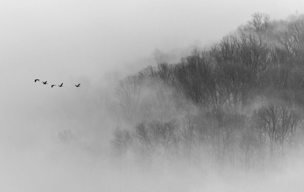 A piece of fine art art photography titled Above Mist by 李从军 / Austin Li