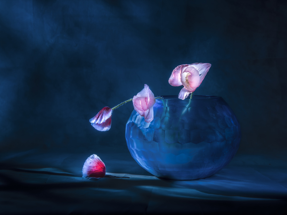 View this piece of fine art photography titled Life by Judy Tseng