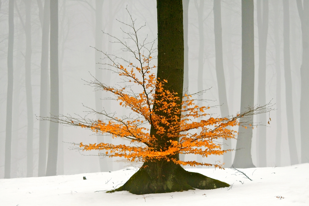 A piece of fine art art photography titled Untitled by Leszek Paradowski
