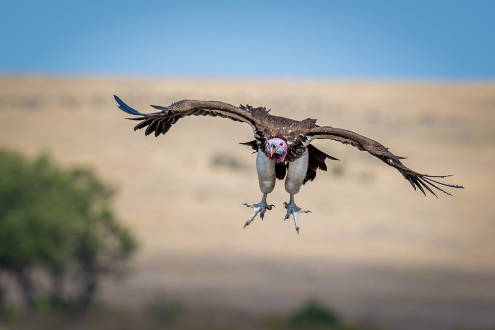 A piece of fine art art photography titled Vulture Airlines by Jeffrey C. Sink