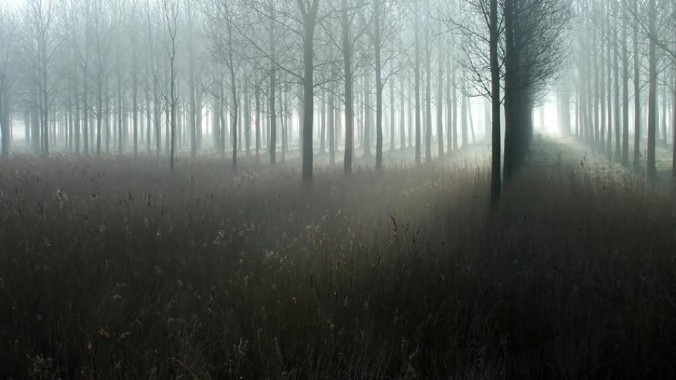 A piece of fine art art photography titled Fog by dikken