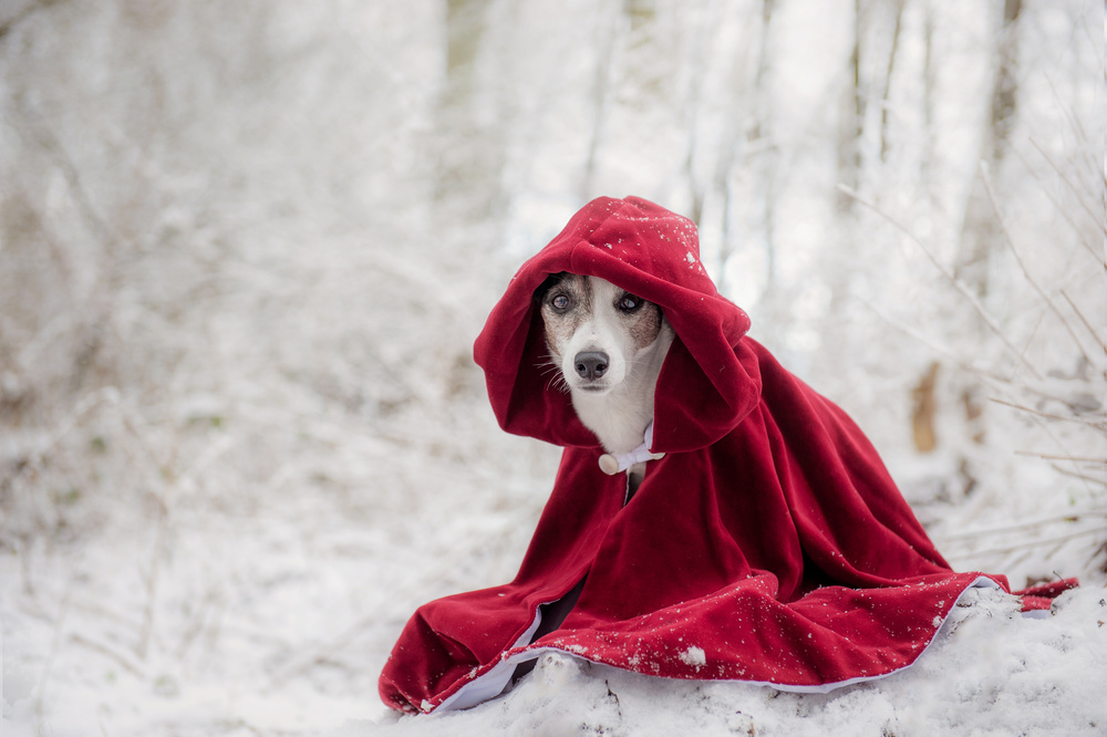 A piece of fine art art photography titled Little Red Riding Hood In Winter by Heike Willers
