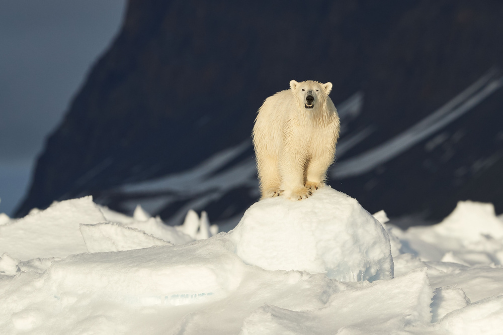 The Most Iconic Figure Of The Arctic