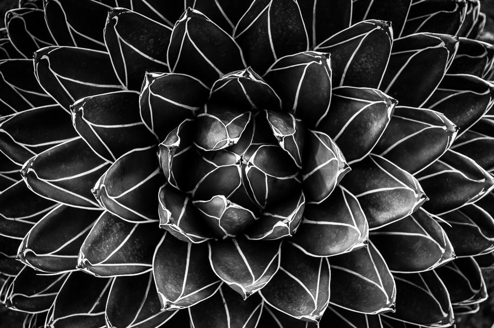A piece of fine art art photography titled Natural Math by Monica Valentina Patrascoiu
