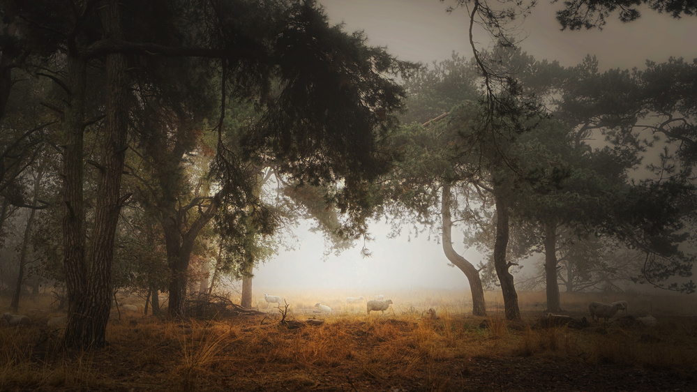 Foggy memory  of the past