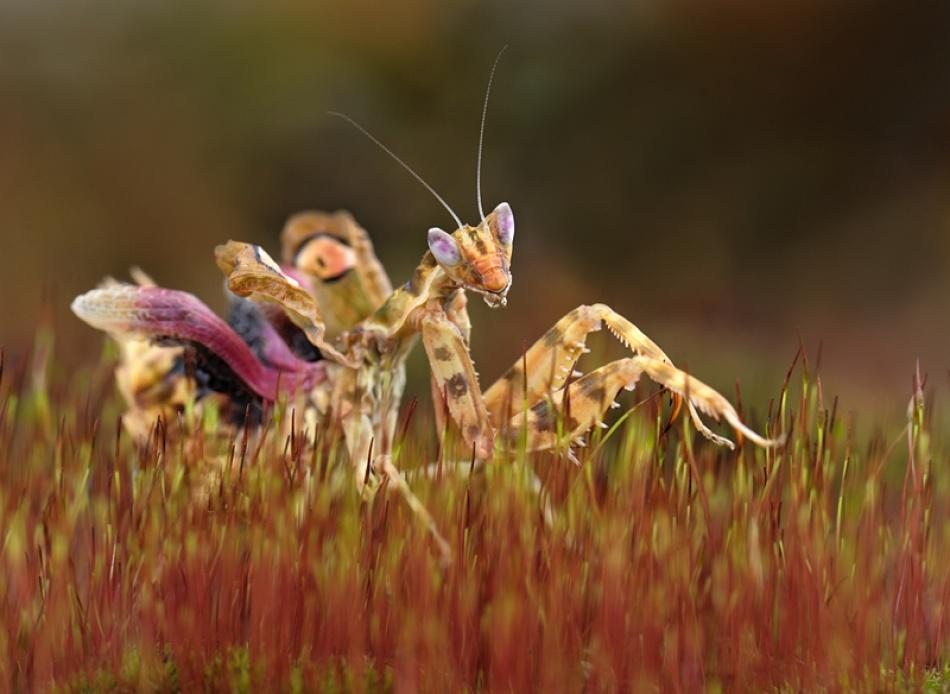 A piece of fine art art photography titled Untitled by arachiusz