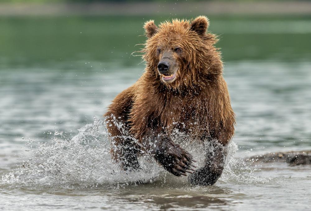 Te run in the lake (fishing)