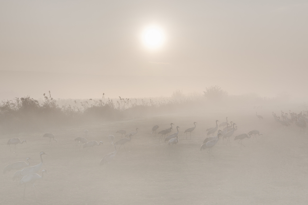 A piece of fine art art photography titled Misty Morning by Natalia Rublina