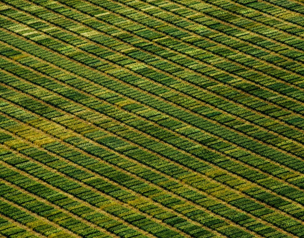A piece of fine art art photography titled Patterned Wheat by Gregg Teasdale