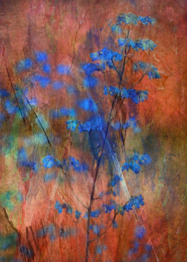 A piece of fine art art photography titled Colors Dance On Flowers by Delphine Devos