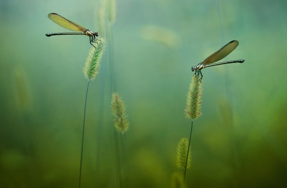 A piece of fine art art photography titled Love Goes Around by Erwin Astro