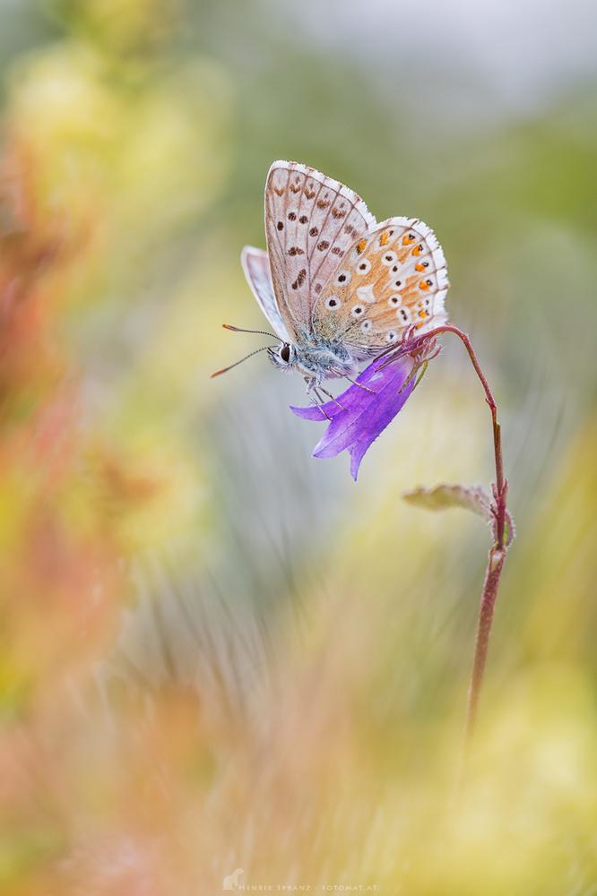 A piece of fine art art photography titled Flower Ride by Henrik Spranz