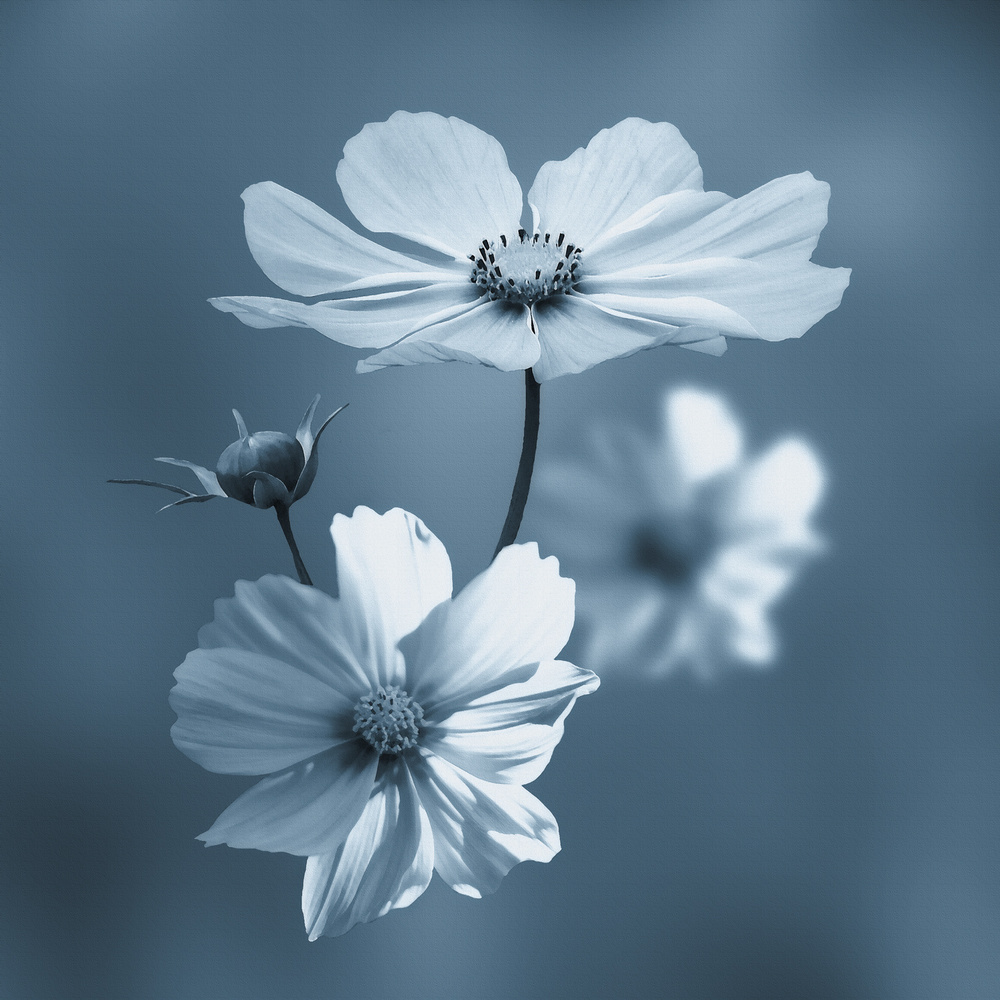 A piece of fine art art photography titled Blue Summer by Stefan Eisele