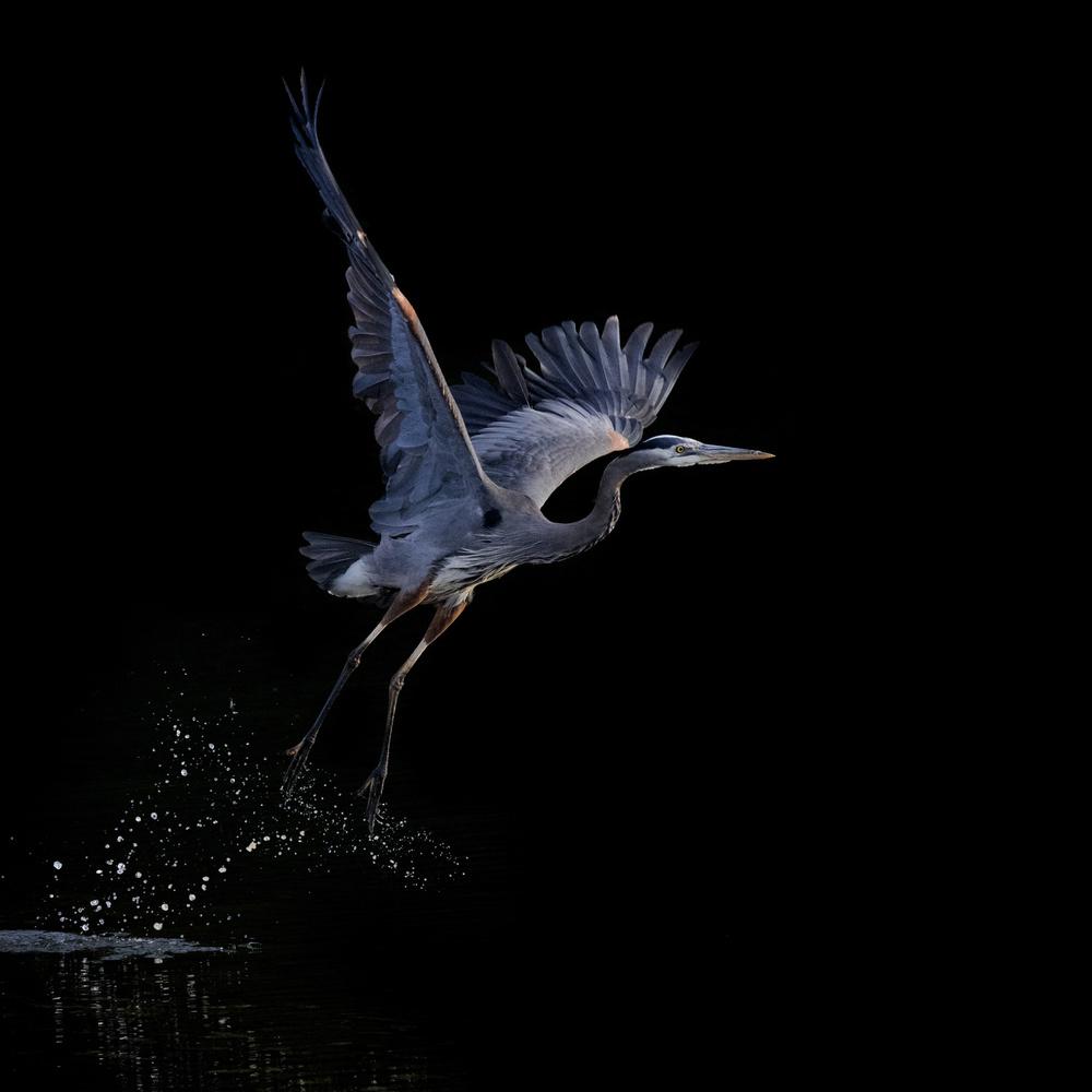 A piece of fine art art photography titled Untitled by Wanda Li