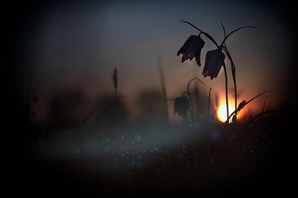 """"""" Mystical meadow..."""""""