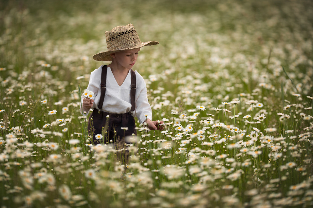 A piece of fine art art photography titled Wild Daisies by Lisa Holloway