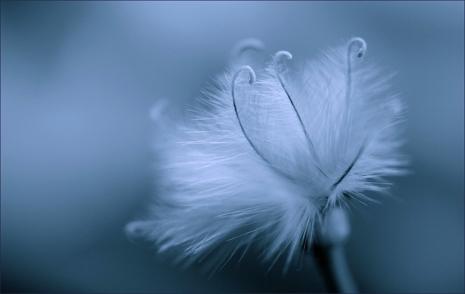 A piece of fine art art photography titled Delicate by photographics