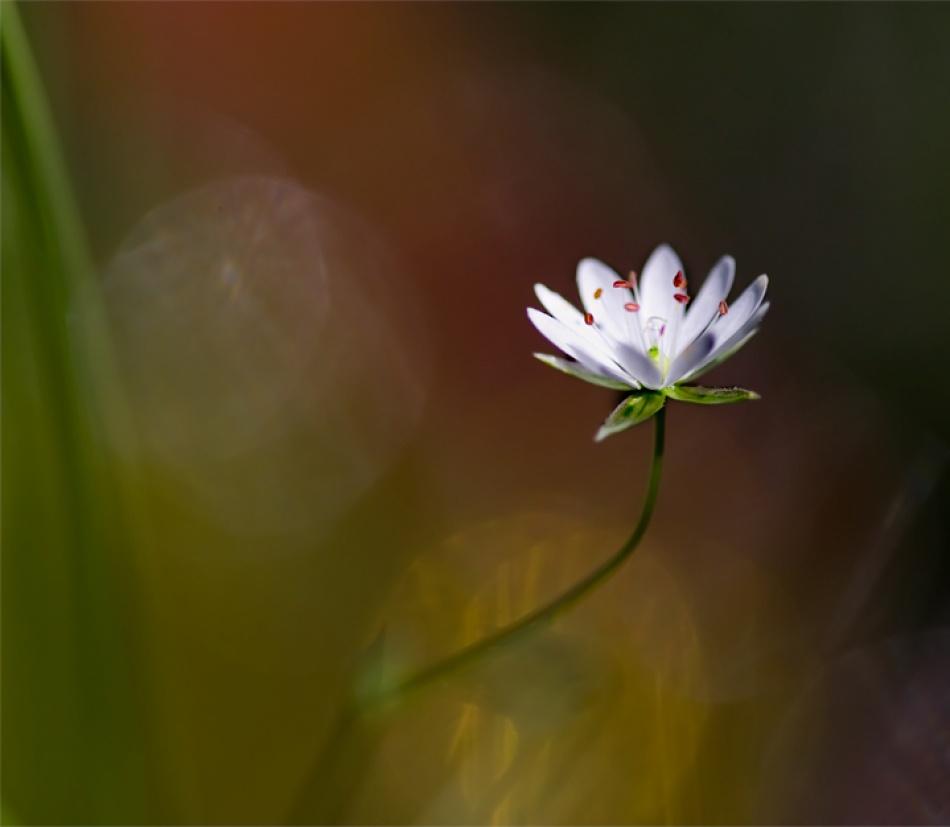 A piece of fine art art photography titled In the Heat of the Light by Bee Thalin