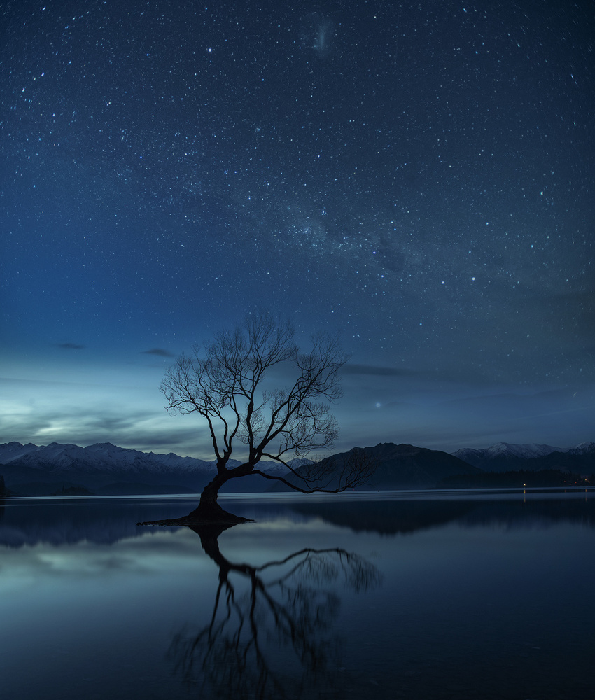 Wanaka tree, New Zealand