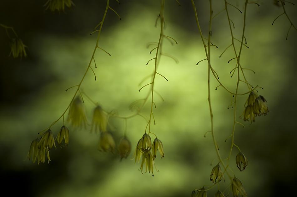 A piece of fine art art photography titled Moody Green by Paula van den Akker