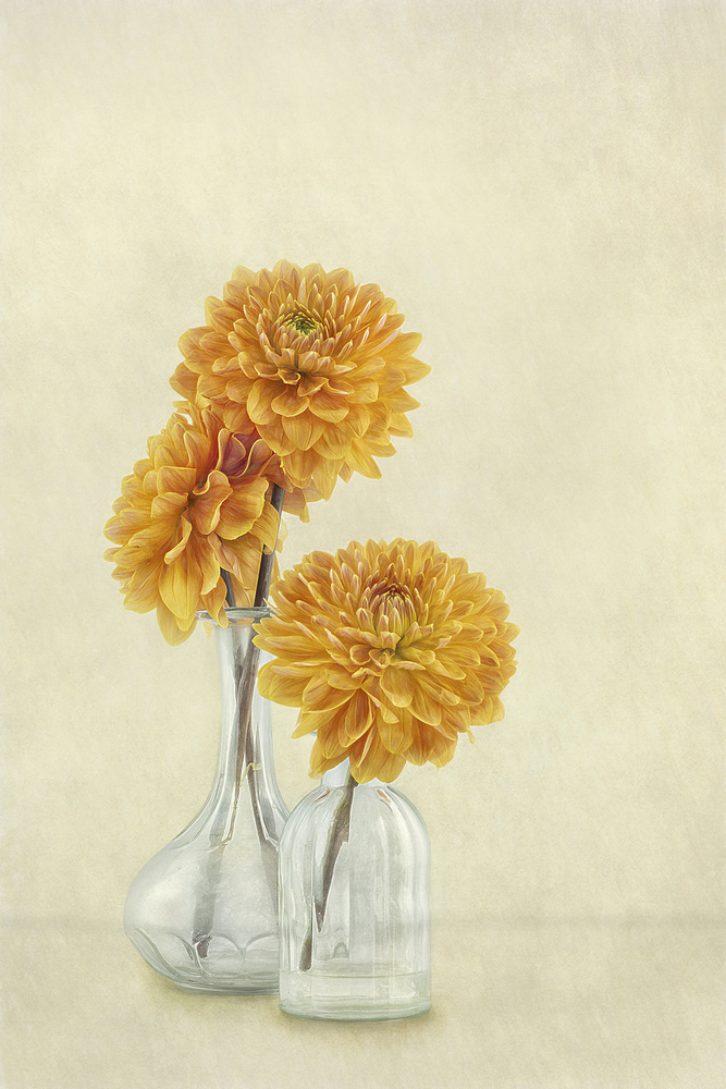 View this piece of fine art photography titled 3 Dahlias by Gaille Gray