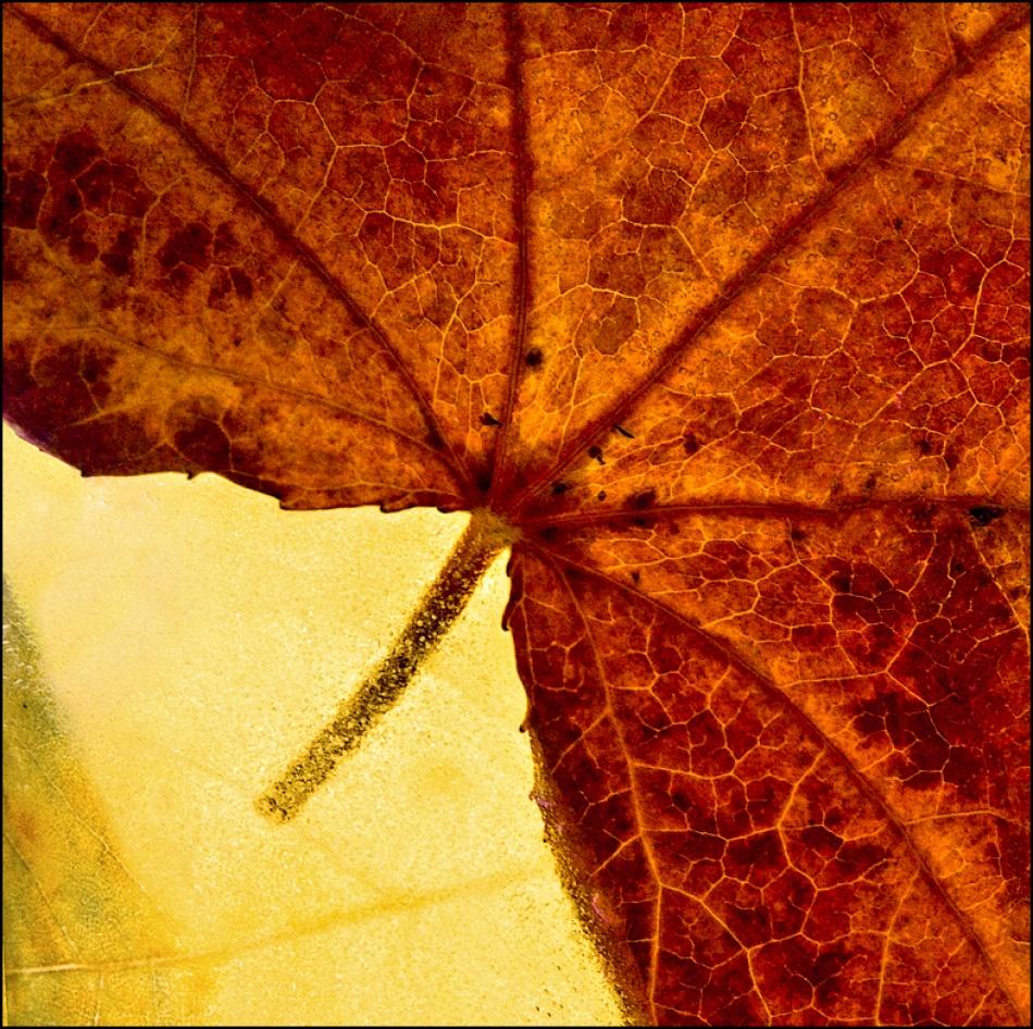 A piece of fine art art photography titled When Autumn Slides Into Winter by Inés Montenegro