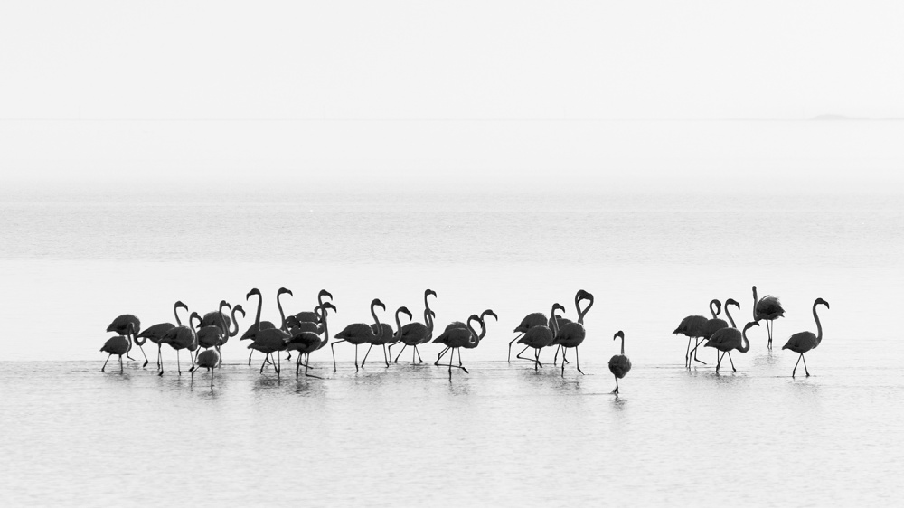 A piece of fine art art photography titled Flamingos by Joan Gil Raga