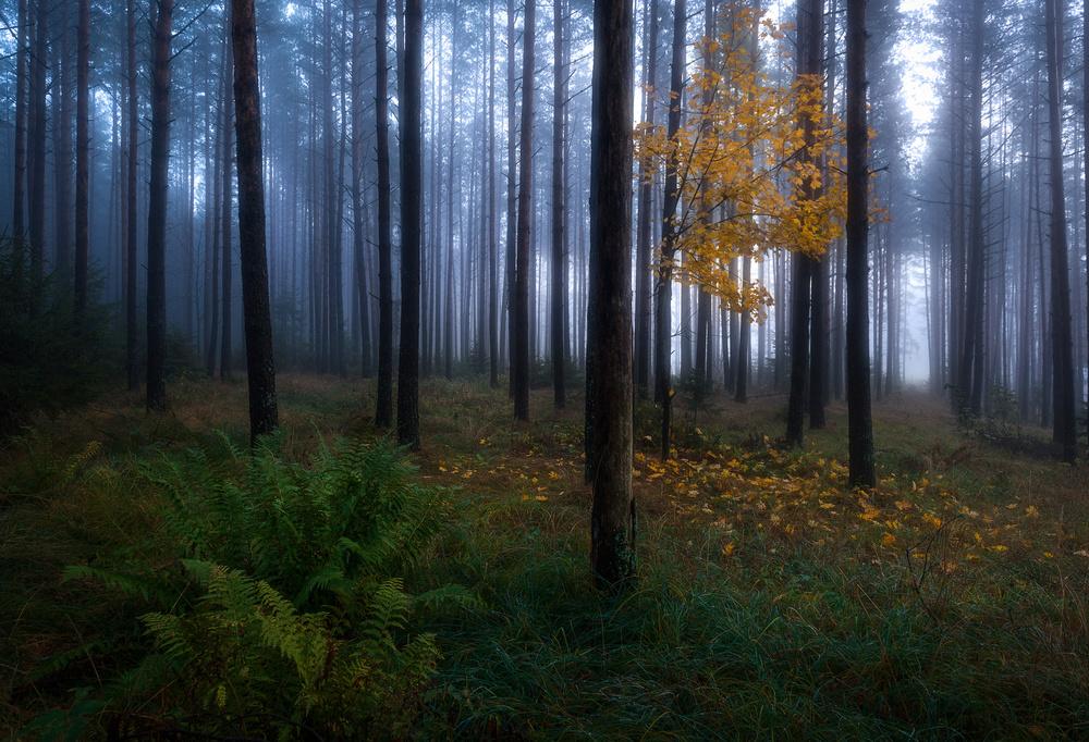 A piece of fine art art photography titled The Dark Light by Christian Lindsten