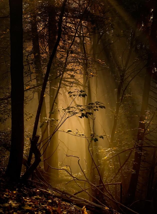 A piece of fine art art photography titled Undergrowth by Norbert Maier