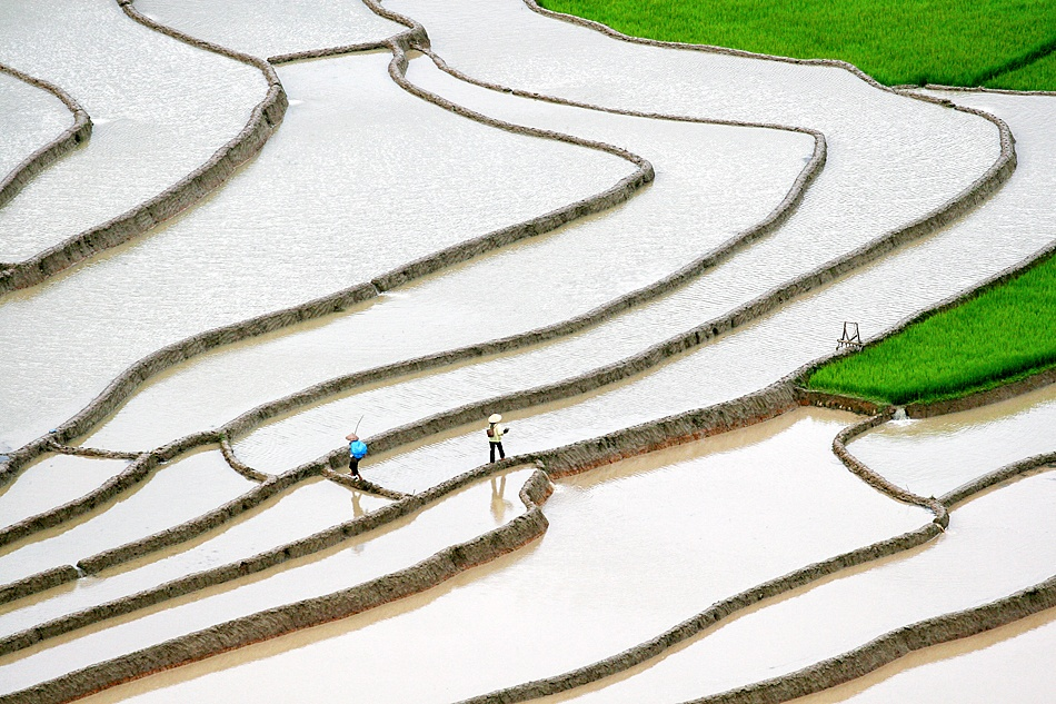 A piece of fine art art photography titled Rice Terrace by nhattan