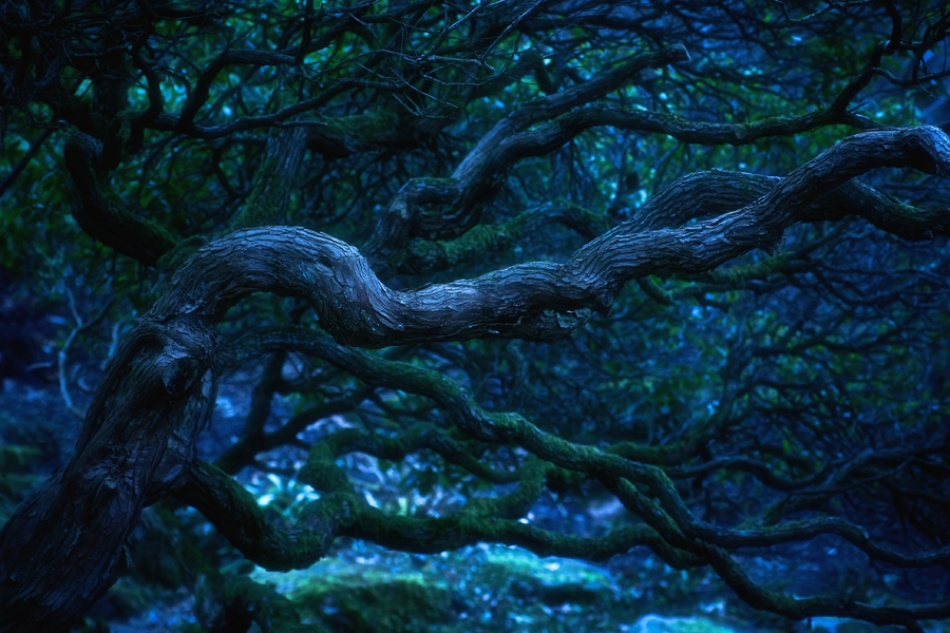 A piece of fine art art photography titled In the Land of Talking Trees by Jhonny Neumann