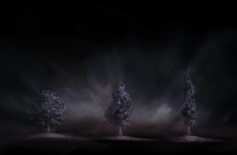 Le tre piante
