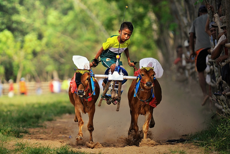 A piece of fine art art photography titled Little Jockey In Action by Arnov Setyanto
