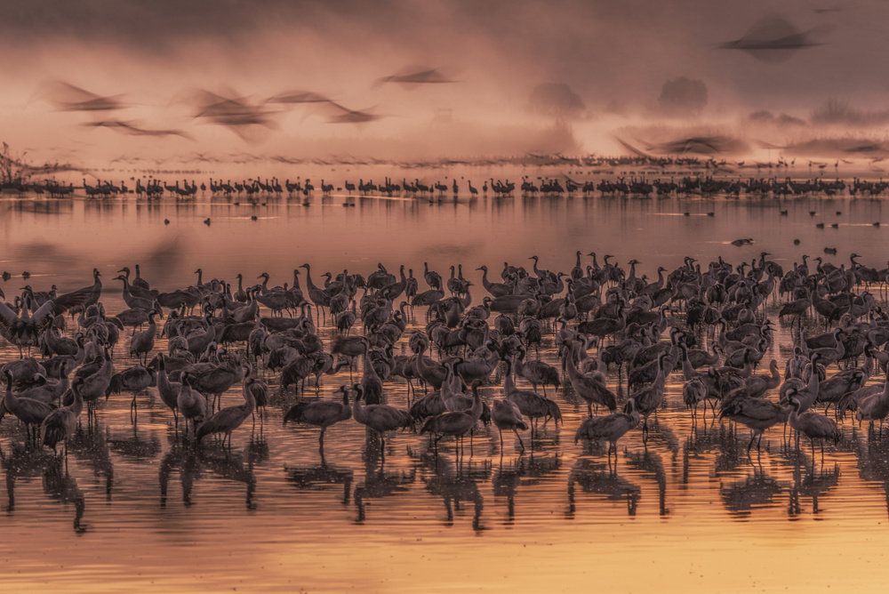 A piece of fine art art photography titled Twilight by the Lake by keren or