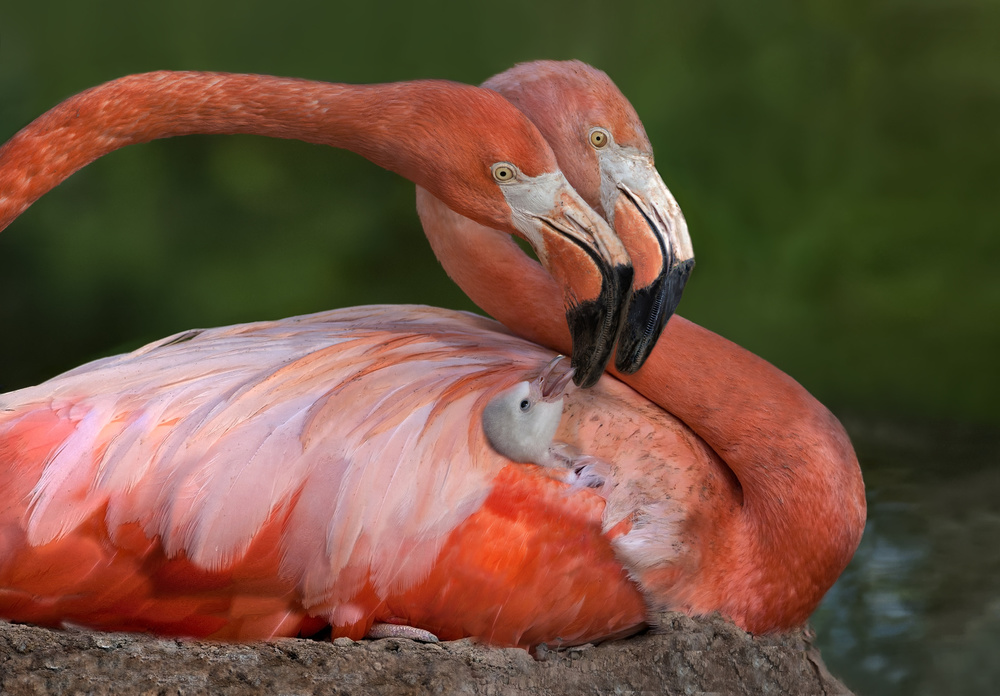 A piece of fine art art photography titled Tender Love by Xavier Ortega