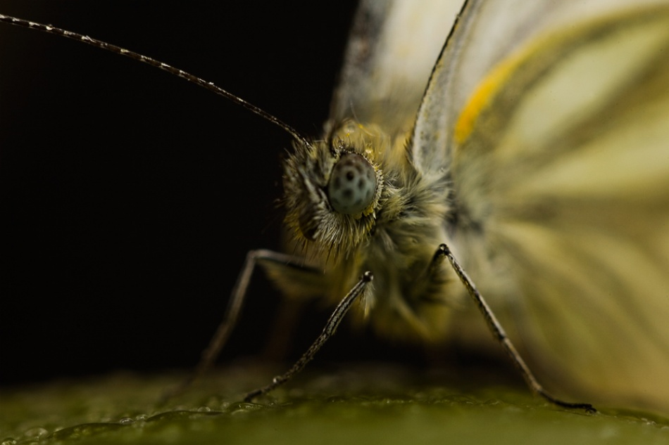 A piece of fine art art photography titled Butterfly by Semir Catovic