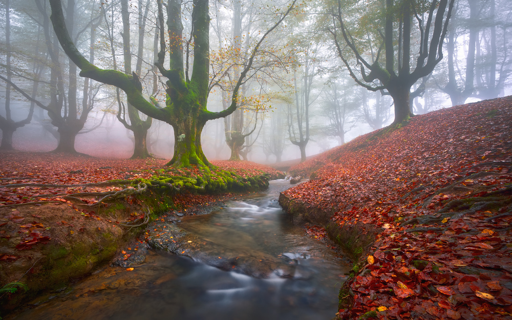 Misty Morning in Otzarreta