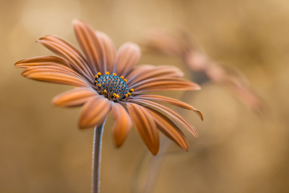 A piece of fine art art photography titled Summer Glow by Mandy Disher