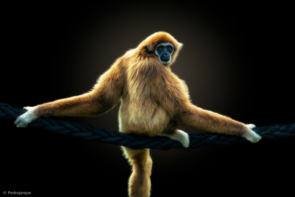 View this piece of fine art photography titled No palm oil, please ! by Pedro Jarque