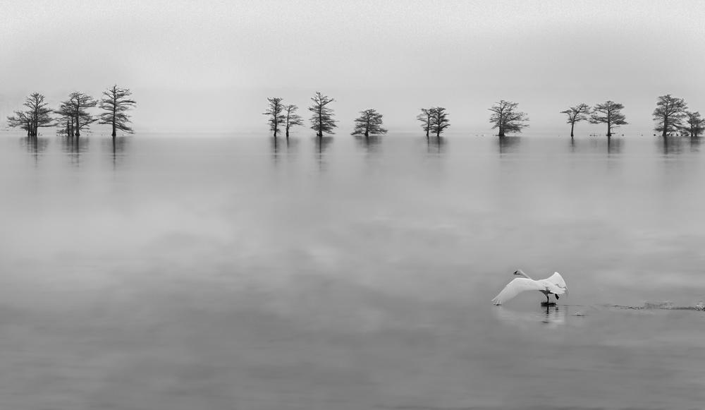A piece of fine art art photography titled Solo by Liyun Yu